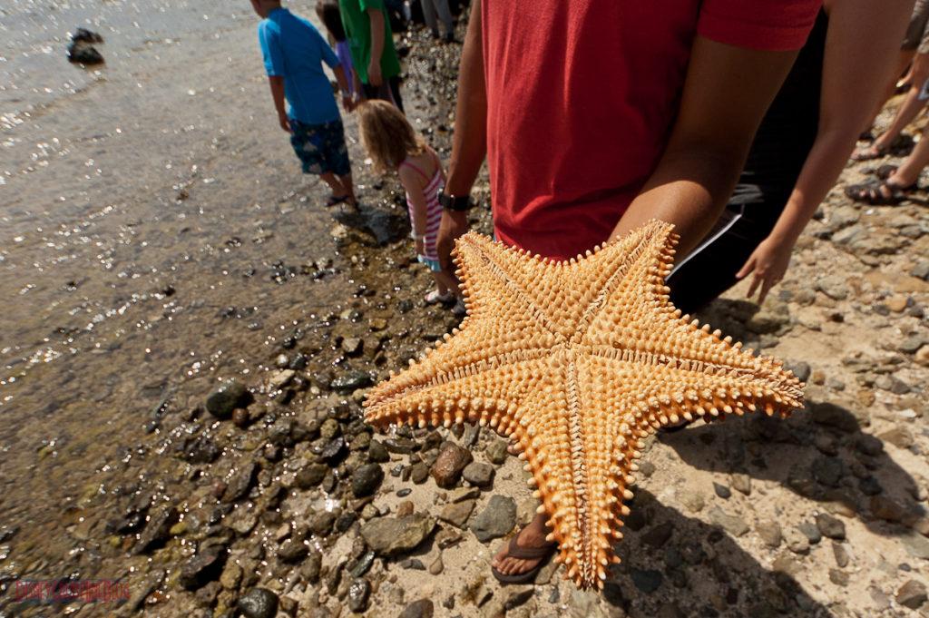 Bernard's Tours - Observatory of Coralita - Starfish