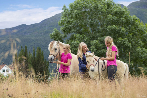 Norwegian Fjord Horse Center