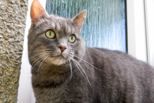 Kirkwall Cemetary Cat