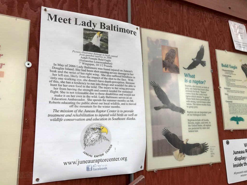 Lady Baltimore Information