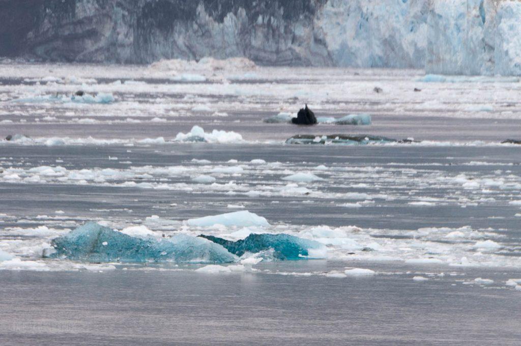 Old Hubbard Glaicer Ice