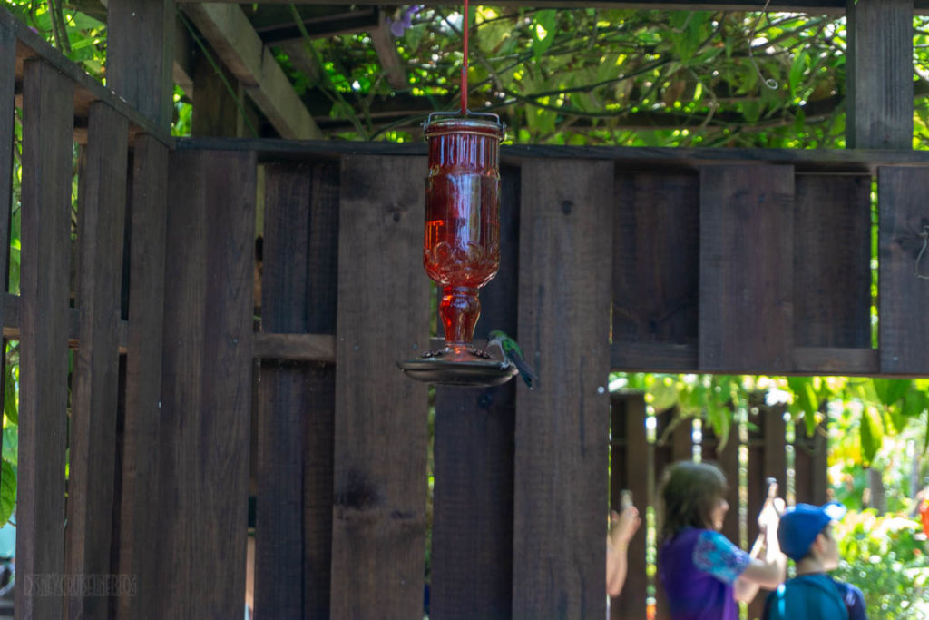 Mystic Mountain Hummingbirds