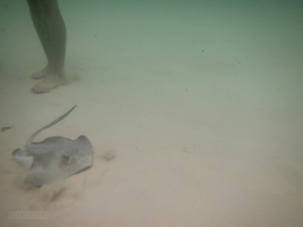 Captain Marvins Grand Cayman Stingray City