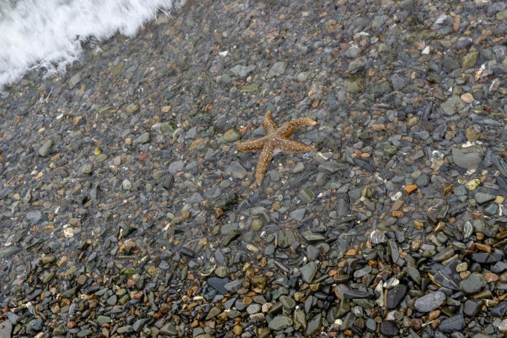Icy Strait Point Starfish