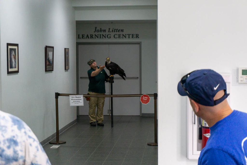Sitka Alaska Raptor Center Bald Eagle Trainer