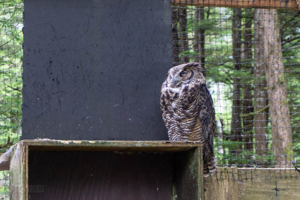 Sitka Alaska Raptor Center Owl