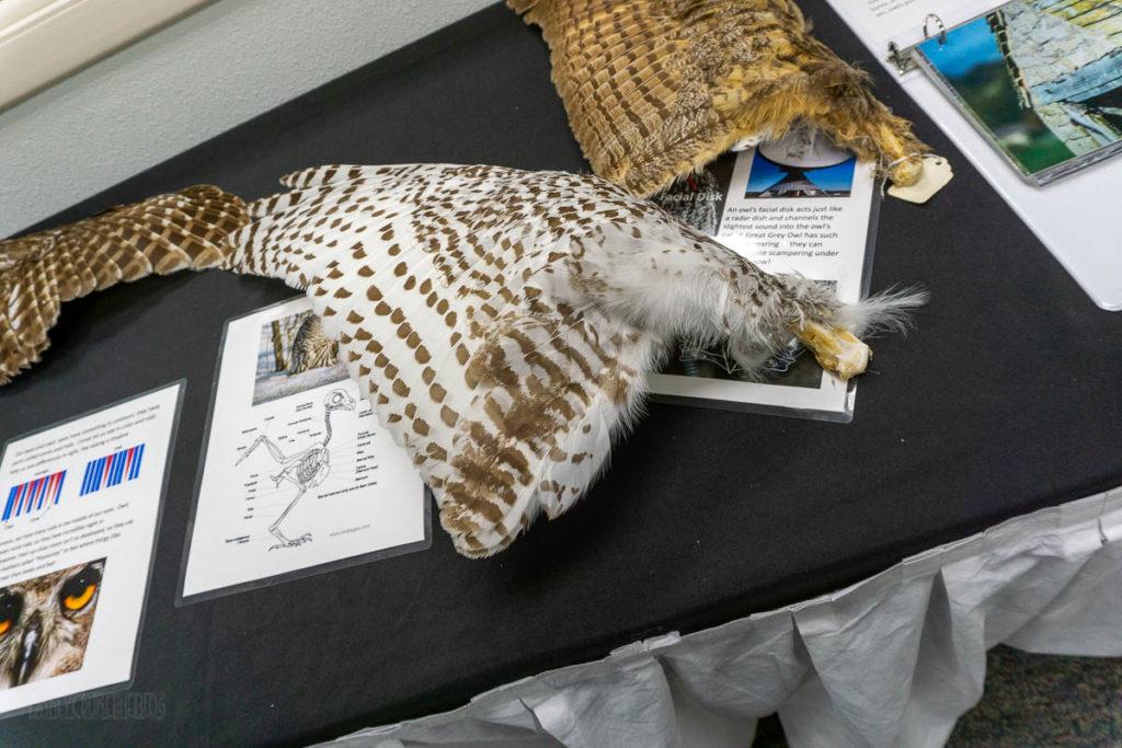 Sitka Alaska Raptor Center Wings