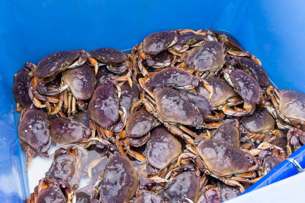 Sitka Crab Brew