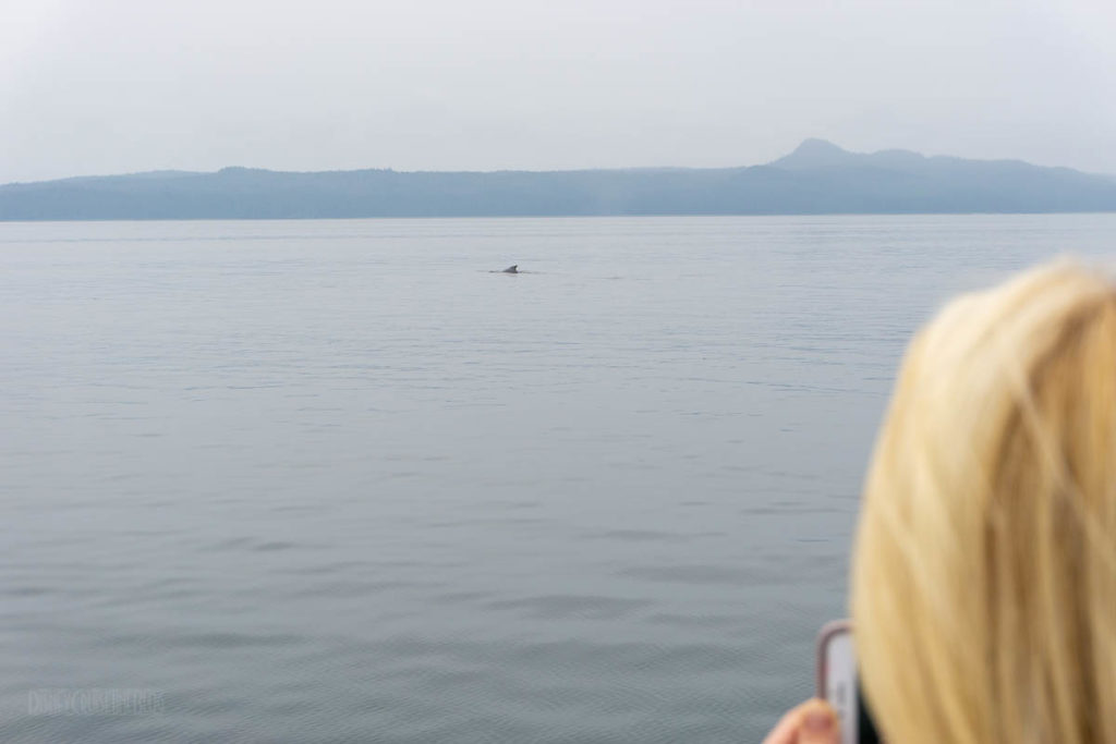 Icy Strait Point Whale Marine Mammals Cruise IS01 Whale