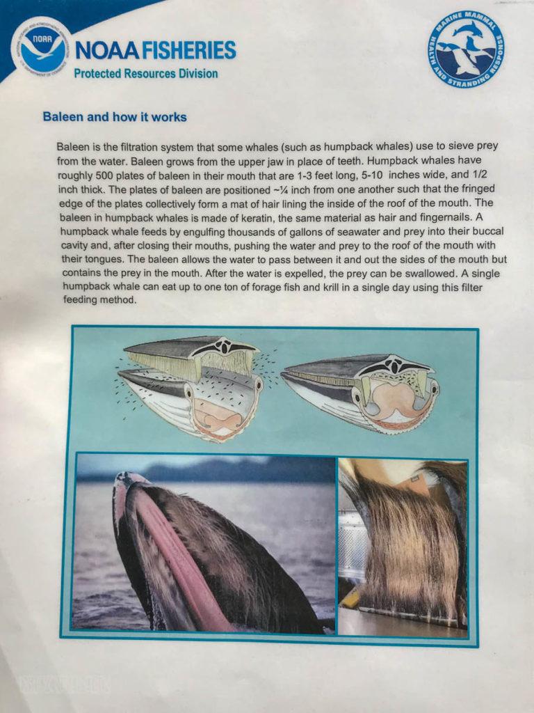 NOAA Fisheries Baleen