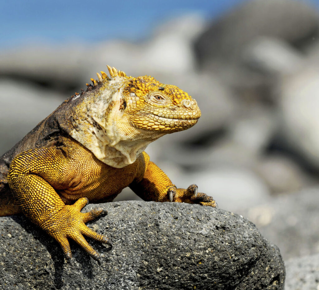 Adventures By Disney Expedition Cruises – Wildlife Viewings In The Galapagos